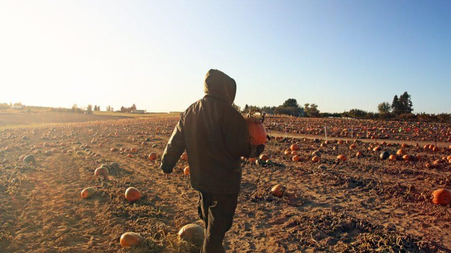 """カナダ・バンクーバーの本格的ハロウィン  """"Pumpkin Patch""""。簡単に行ける かぼちゃ畑の場所と行き方。"""