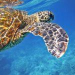 【旅ログ・ハワイ】冬だからハワイ!飛行機・宿の上手な選び方とは?